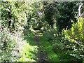 SJ8903 : Monarch's Way, Pendeford by Geoff Pick